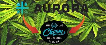 Breaking Down The Aurora Cannabis Acb Investment Portfolio