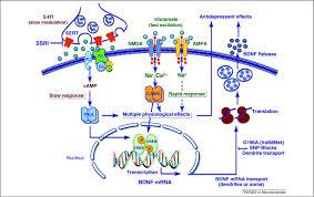 Signaling pathways underlying the pathophysiology and ...