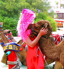 Kamel Red Light Download Free Picture Girl Hugs Camel On Cc By License