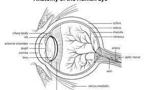 A Overview Of Ocular Histoplasmosis