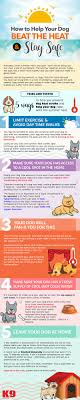 How to Help Your Dog Beat the Heat \u0026 Stay Safe