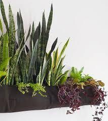 indoor gardening ideas. VIEW IN GALLERY Indoor Woolly Pocket Gardening Ideas