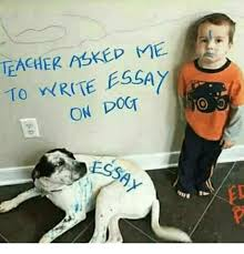 teacher askep to write essay on dot ess ed meon me memes teacher and 🤖 teacher askep to write essay on dot ess