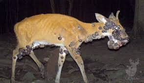 how to recognize 5 mon lethal deer diseases