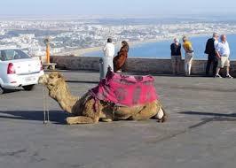 Image result for agadir camel