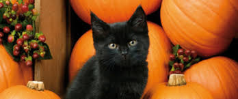 halloween black cat. Delighful Halloween This Halloween As You Carve Your Pumpkins Don Yards With Cobwebs And  Fill Up Bowls Of Treats For The Tiny Twolegged Spooksters To Arrive  Intended Halloween Black Cat Z