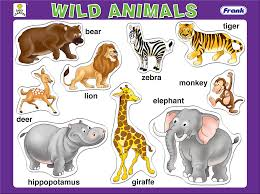 Image result for wild animals