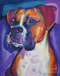 colorful painting boxer dog portrait by robyn saunders