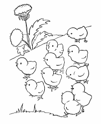 Small Picture Animal Coloring Cute Baby Chicks Preschool Coloring Pages Farm