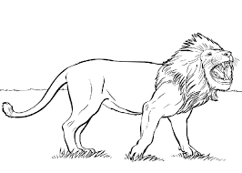 Small Picture Cartoon Jungle Animals Coloring Coloring Pages