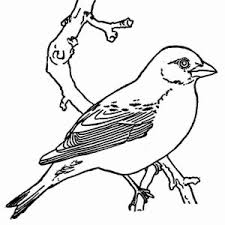 Small Picture Robin Bird Coloring Page Color Luna