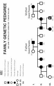 Three Generation Pedigree Chart Pedigree Lab International Baccalaureate Biology Marked