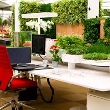 office greenery. Buy Plant For Office Desk Online At Nursery Live | Largest In India Greenery E