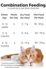 Baby Kitten Feeding Chart Feeding Your Kitten Kitten Food Feeding Kittens Kittens