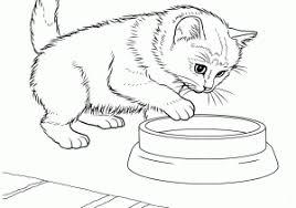 Disegno Di Gattino Da Colorare