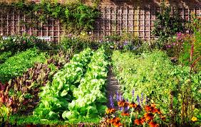 wish you could have fresh flavorful vegetables right at your fingertips all season long do you want to be confident that your vegetables are safe for your