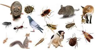 افضل رش مبيدات مكافحه حشرات بالرياض
