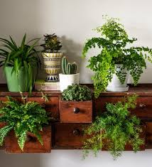low maintenance office plants. Source: The Guardian Low Maintenance Office Plants