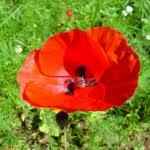 Resultat d'imatges de florecillas silvestres