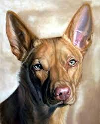 australian kelpie dog portrait painting australian kelpie dog portrait by olde time mercantile