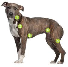 Lymphoma In Dogs Diagnosis And Treatment