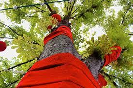 Bildergebnis für Bäume bestricken