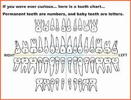 Valid Diagram Of Teeth Numbers Tooth Numbering System Usa