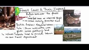 essay on s forest policy and law forest policy and conservation of forests