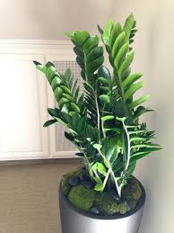 feng shui plant office. Plants For The Office Fluorescent Lighting Light Where To Put In Feng Shui . Plant A