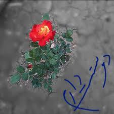 Image result for آه ای عشق من  ای از آن  من