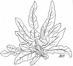 Coloring Pages Of Plants Google Search