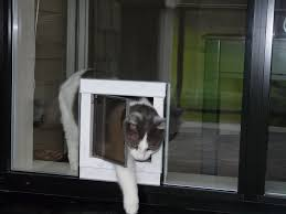 window mounted plexidor cat door