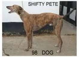Pedigree of Shifty Pete