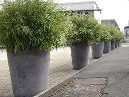 Pot Pour Bambou Terrasse Evneo Info 10 Jan 18 17 22 12