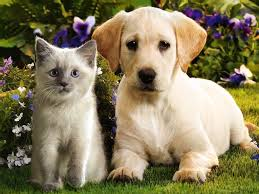 cute kittens and puppies wallpaper. Plain Kittens Teddybear64 Images Kittens U0026 Puppies HD Wallpaper And Background Photos In Cute And Wallpaper