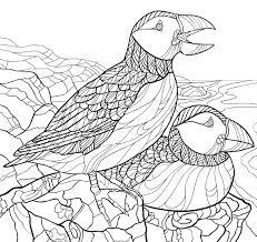 Americas Favorite Birds Coloring Page Downloads Cornell Lab Pub
