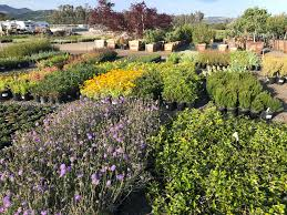 sonoma valley whole nursery offers a vast selection of high quality plants grown according to organic sustainable principles to thrive in our local