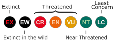 Iucn Classification Critically Endangered Endangered And