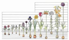 How To Planting Guides Brecks