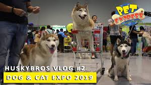 Letting my Dogs choose what to Buy! | PetExpress Dog and Cat Expo 2019