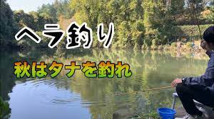 へらぶな 釣り 動画