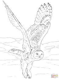 Small Picture Snowy Owl coloring page Free Printable Coloring Pages