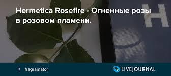 <b>Hermetica Rosefire</b> - Огненные розы в розовом пламени ...