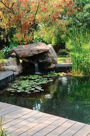 aquatic plants and small waterfall in