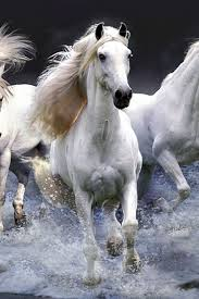 white horses running in water. Simple Water Beautiful White Horses Running Through The Water Please Also Visit  WwwJustForYouPropheticArtcom For Colorful Inspirational Art And Stories Like My  To White Horses Running In Water G