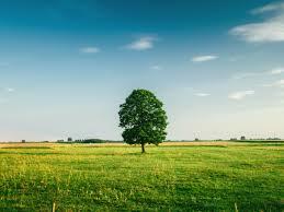 tall green grass field. Free Download Tall Green Grass Field G