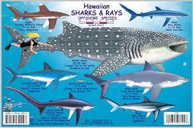 Oahu Fish Chart Hawaii Marlin Fishing Hawaiian Species All