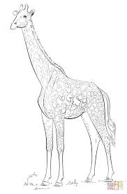 Printable Coloring Pages coloring page giraffe : Masai giraffe coloring page | Free Printable Coloring Pages