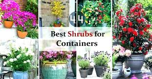 winter plants for planters 5 winter container plants ideas