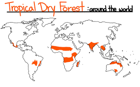 Total 18% are located in west africa. Tropical Biomes Rainforest Dry Forest Savanna Expii